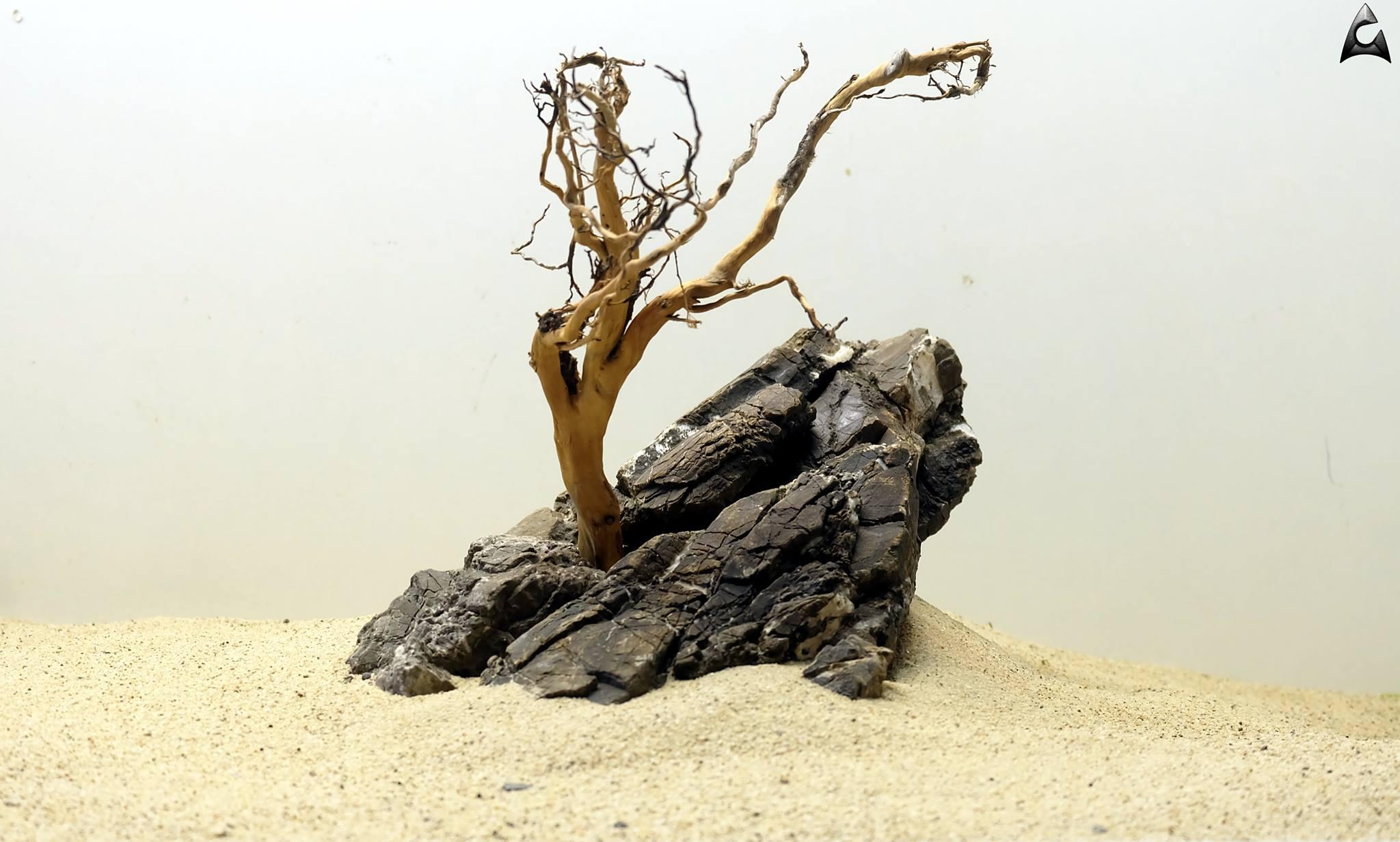 nano_roots
