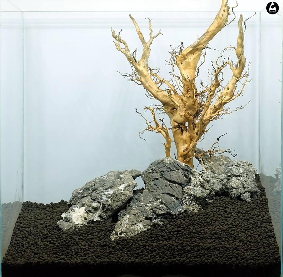 Naturalne korzenie do akwarium