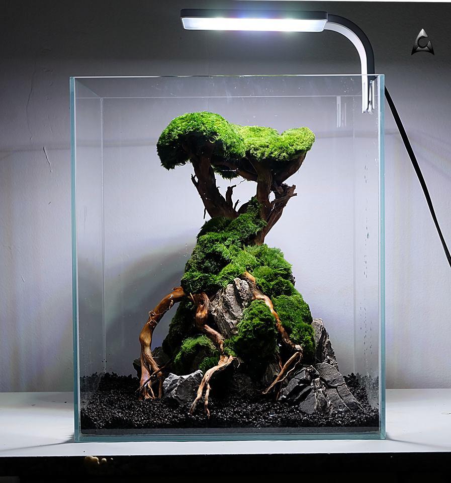 Aranżacja do akwarium 30x30x35