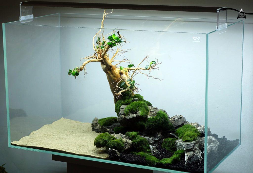 Akwarium 60x30x36 cm wraz z oświetleniem i aranżacją