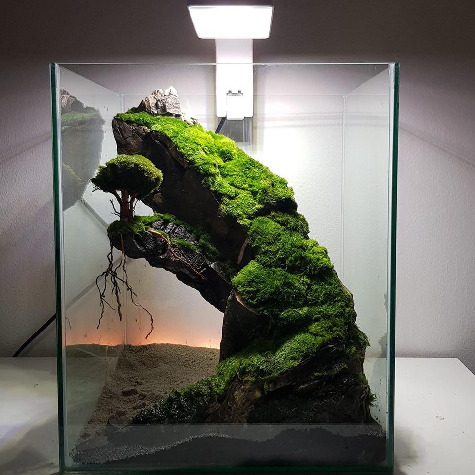 Nano Aquascape Design - Aquascape Ideas