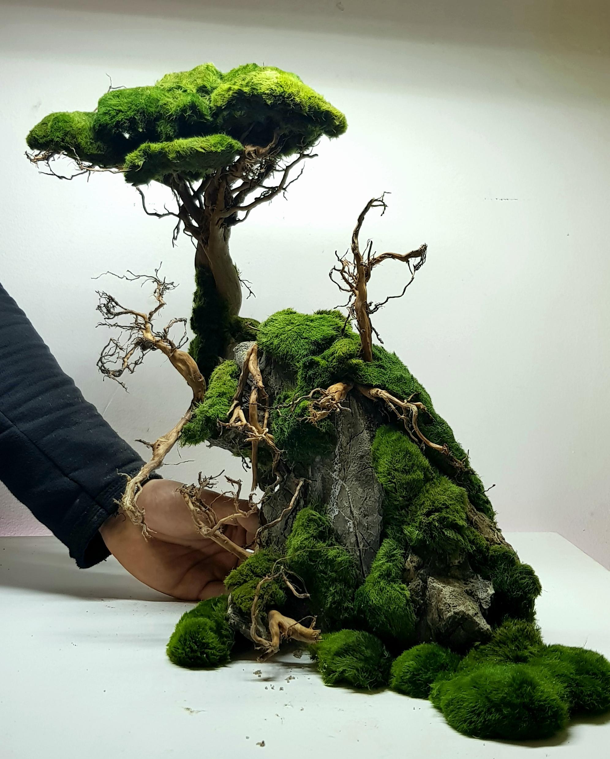 Korzenie do akwarium - drzewko