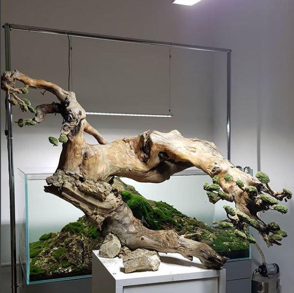 roots_aquarium