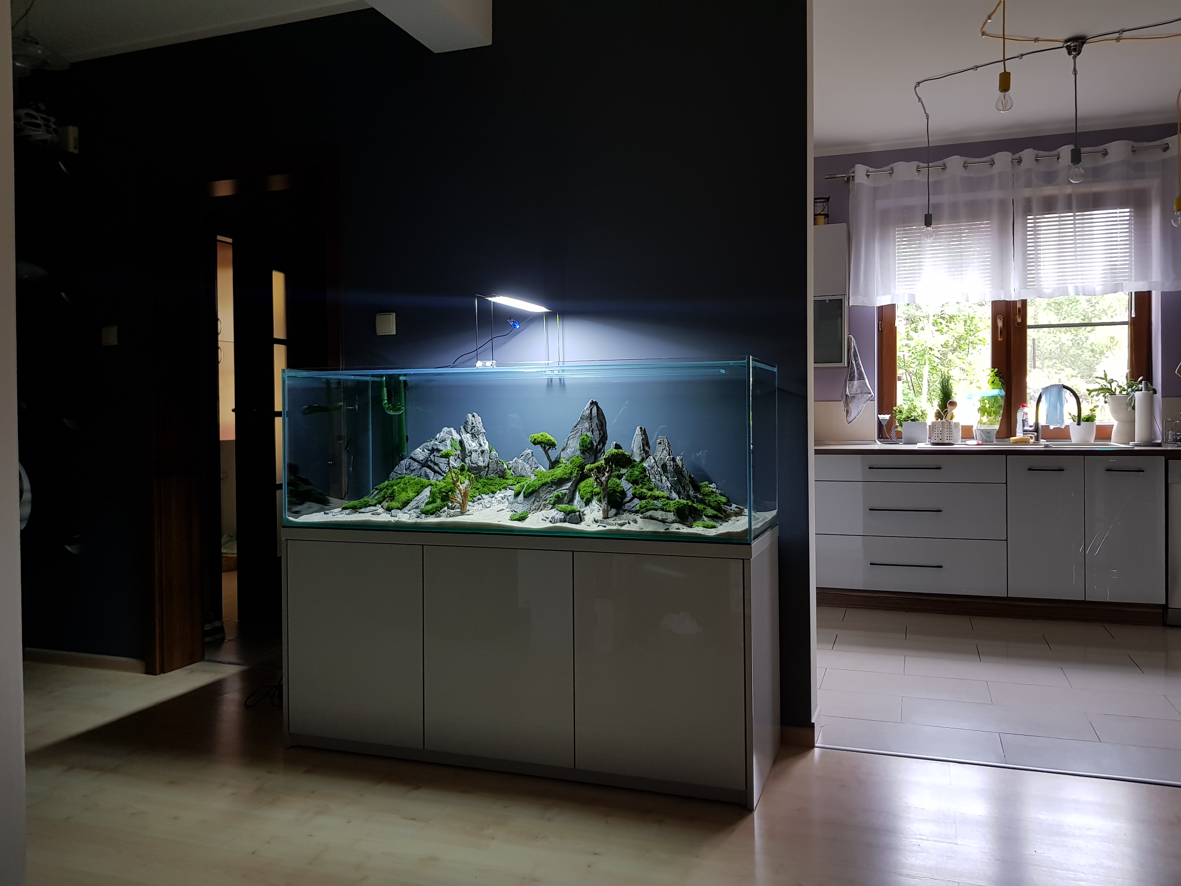Aranżacja akwarium u klienta