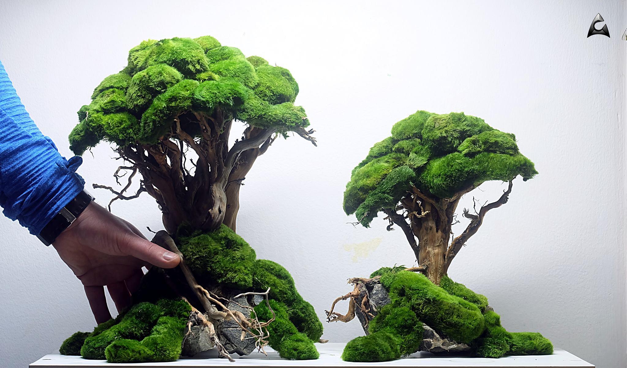 drzewka do akwarium