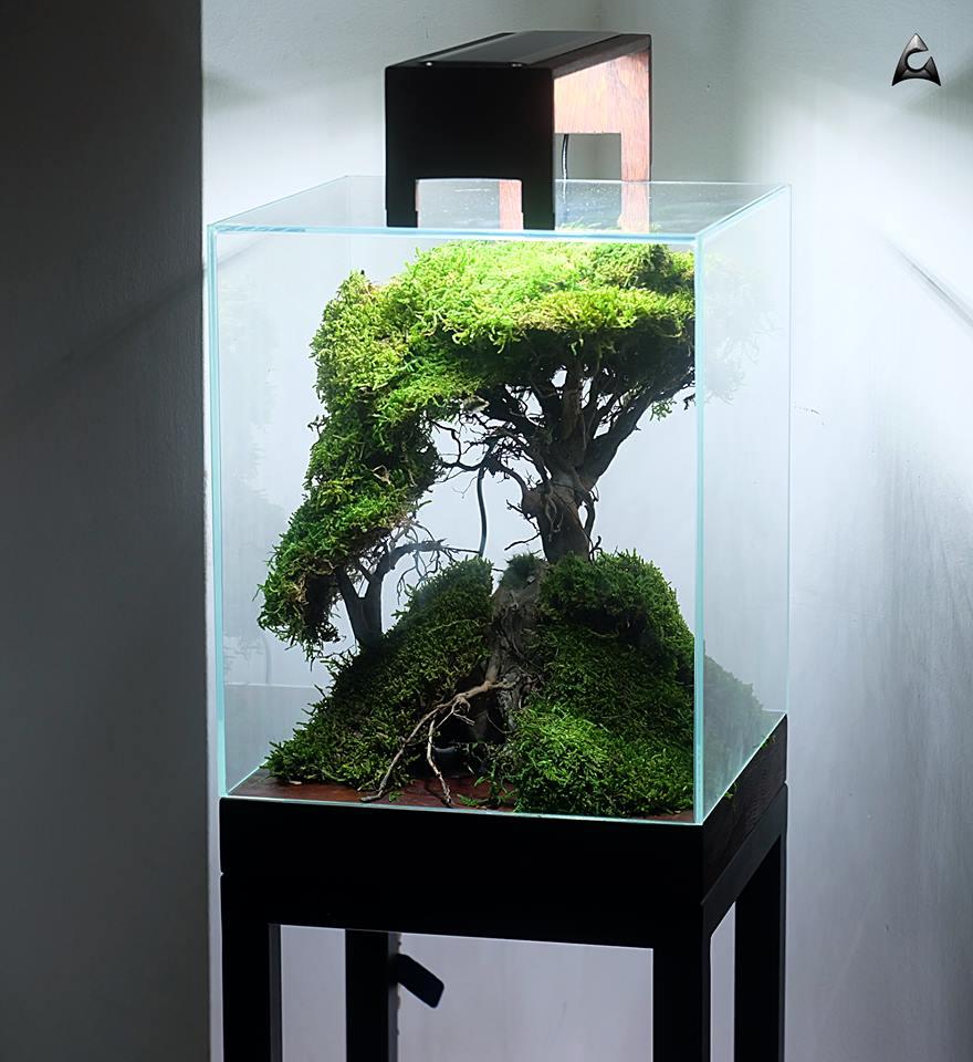 Akwarium Cube