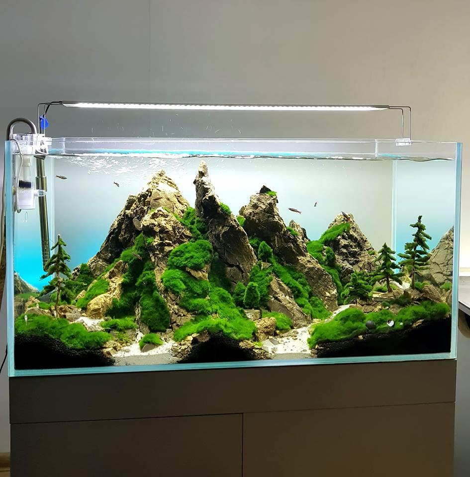 Pielęgnacja naszych akwarium
