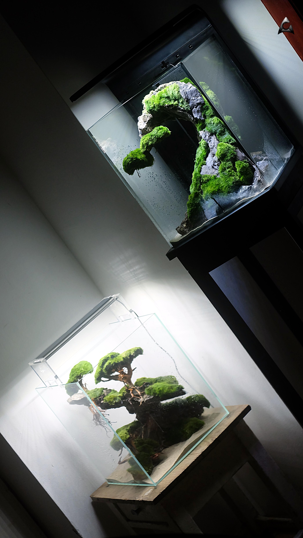 rośliny korzenie do akwarium