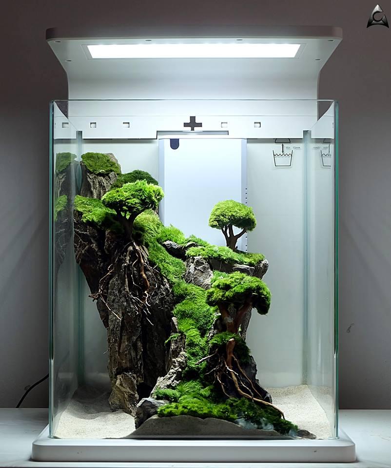 gałęzatka roślina akwariowa
