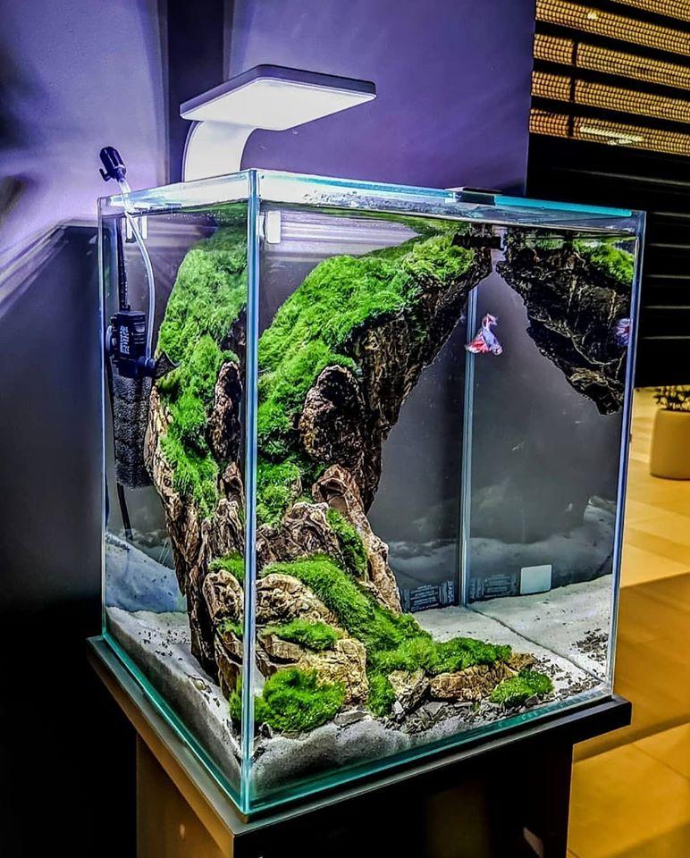 akwarium dla bojownika
