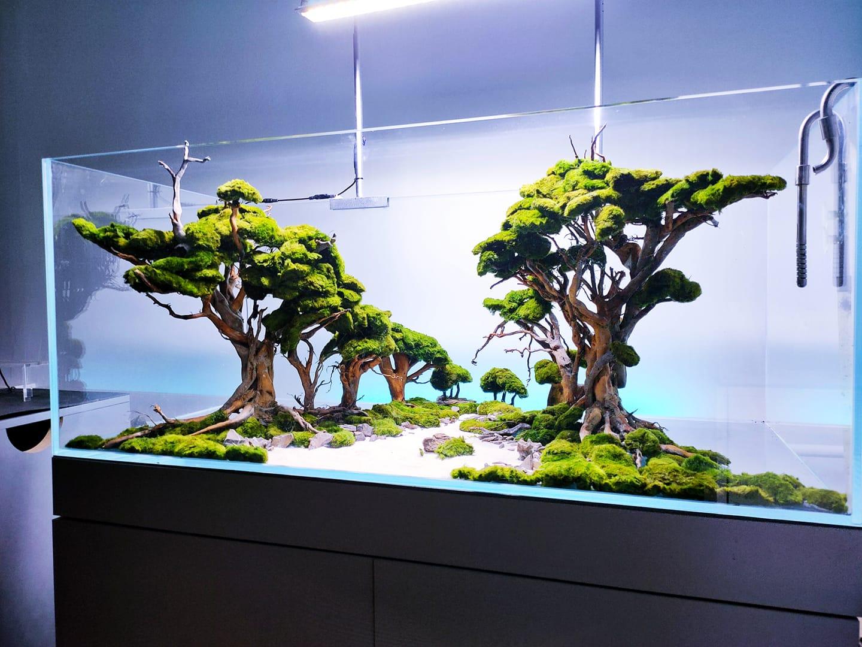 akwarium aranżacja