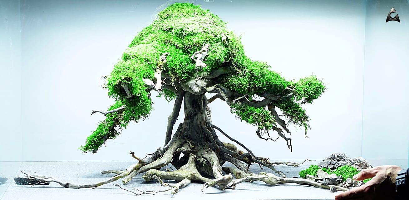 ancient tree korzenie do akwarium